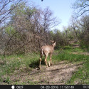 TrailCamGrower
