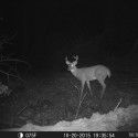 buctrailcam2
