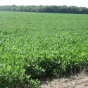 499.5 acres of cropland