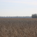 2016 soybeans