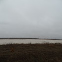 Flooded field for waterfowl