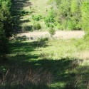 Food plot areas under high lines
